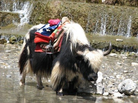 Lijiang - Yulong Snow Mountains 14
