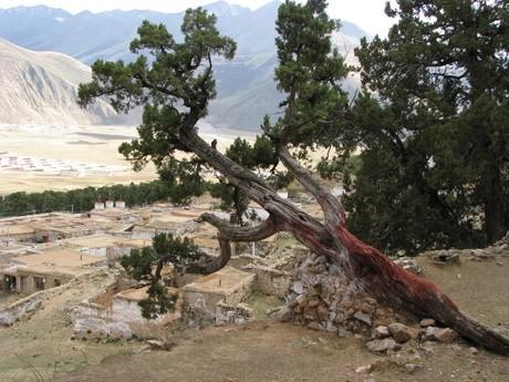 Klasztor wReting, Tybet 14
