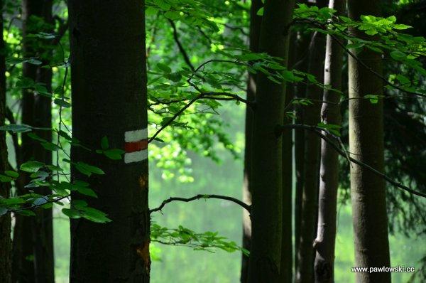 Główny Szlak Beskidzki; Prełuki - Cisna (Bacówka PTTK podHonem) 12