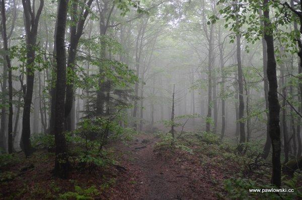 Główny Szlak Beskidzki; Cisna - Połonina Wetlińska (Chatka Puchatka) 6