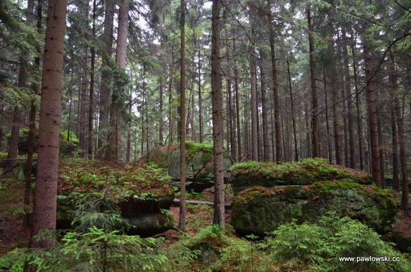 Główny Szlak Sudecki; Wambierzyce - Dańczów 11