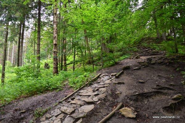 Korona Gór Polski; Pieniny - Wysoka 1050 m. n.p.m. 5