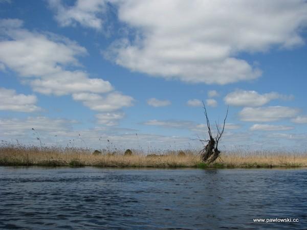 Spływ kajakowy Biebrzą