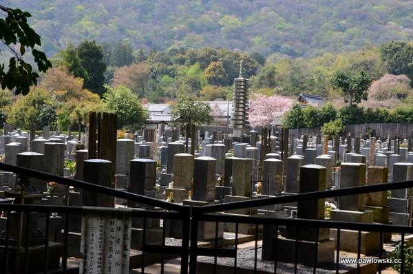 Las bambusowy wKioto, dzielnica Arashiyama iświątynia Tenryu-ji 1